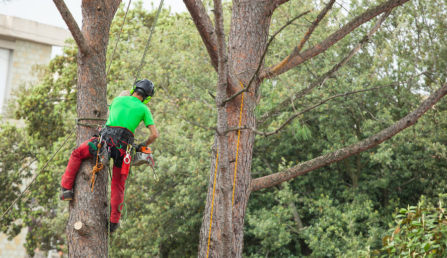 affordable tree trimming and pruning service